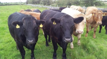 In the news this week was the Beef Summit, silage and cows' hooves