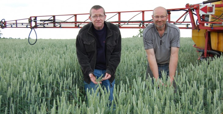 Changing weather patterns to hit wheat yields