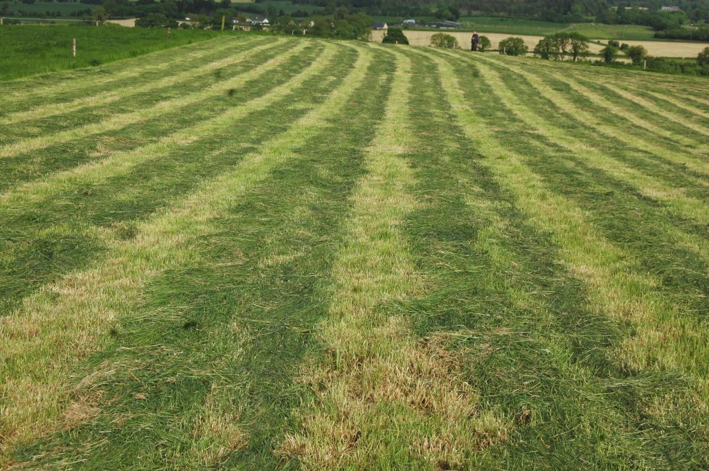 Grass management and quality is vital