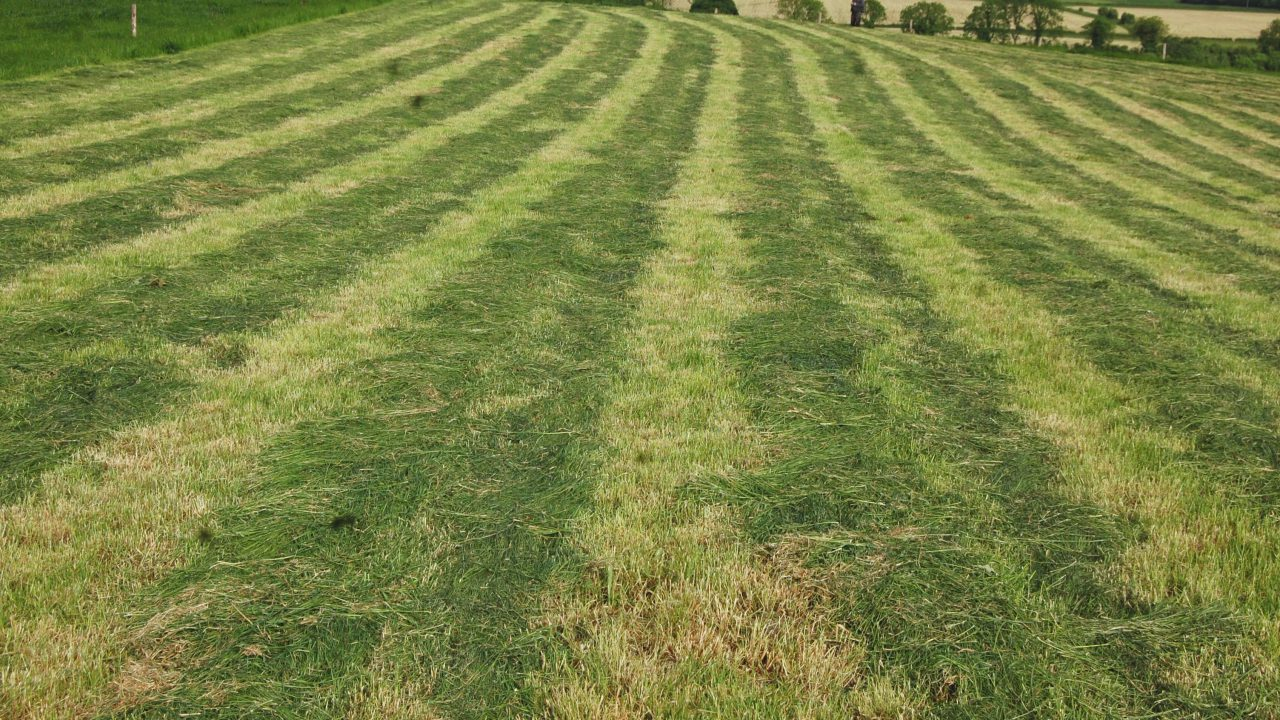 Pre-mowing vs. topping: Which is the better option?