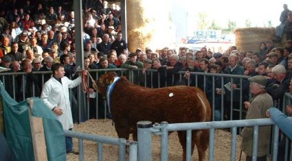 ICBF to sell off 10 Gene Ireland AI bulls