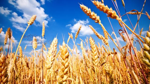 Corn versus horn – it's a question of balance