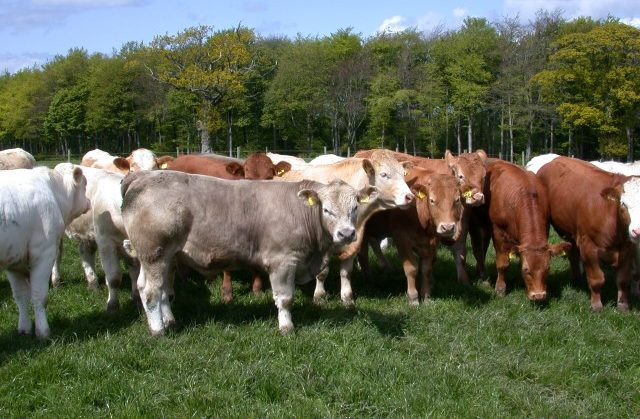 Irish beef factory prices – regional differences evident across all categories
