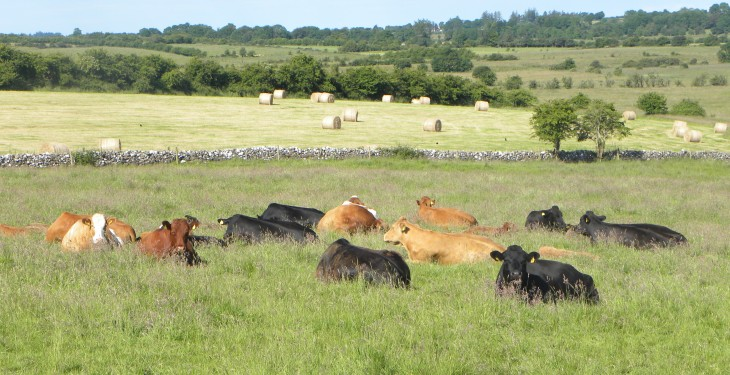 Coveney looks to China for beef exports