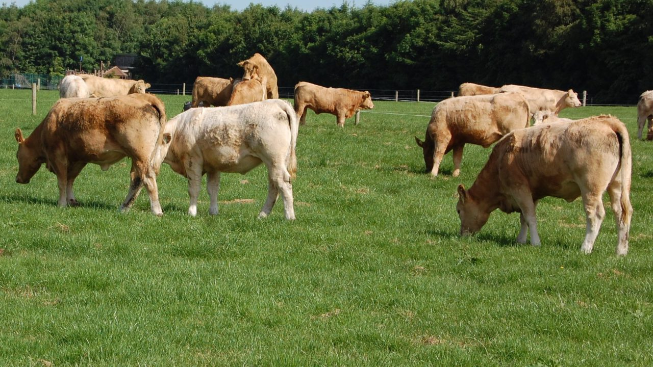 Average beef finisher lost €133/ha last year