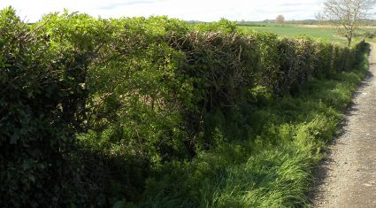 Hedgerows help reduce carbon footprint according to new research