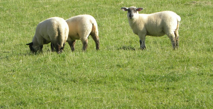 Lamb price cut unwarranted – ICSA