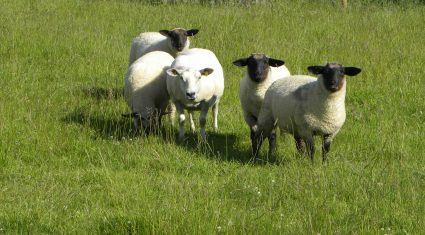 UFU challenges retailers on lamb sourcing