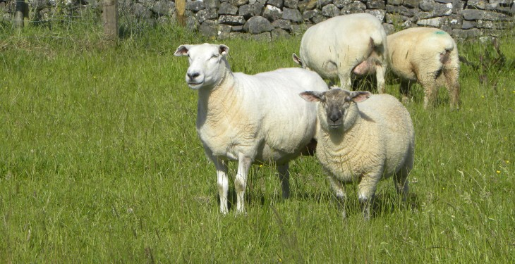 UK sheep meat imports down 7%