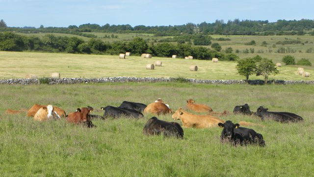 Organic farming has to be part of beef debate