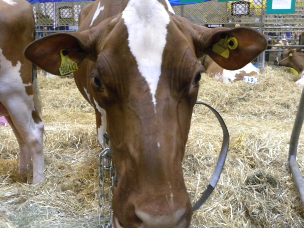 Livestock Event, Day 1 in Photos