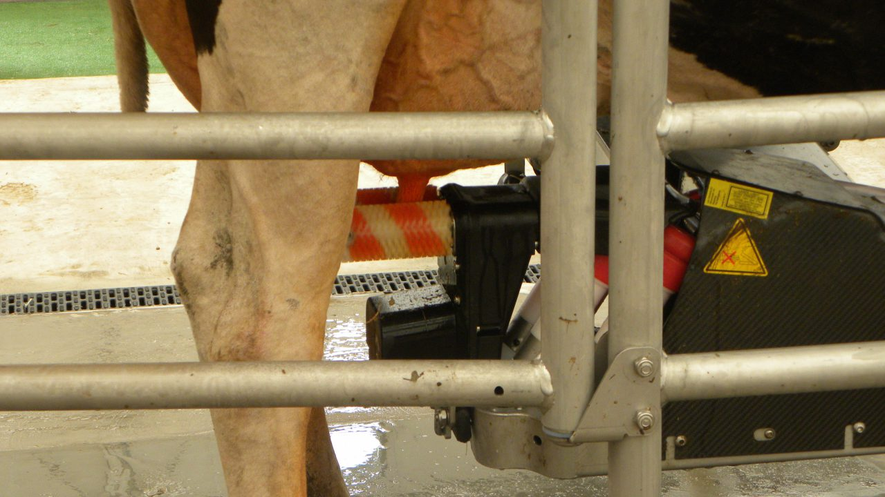 Robotic milking and feeding steal the show at Livestock Event