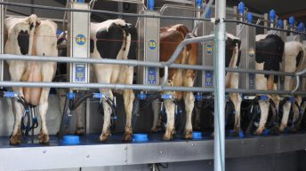 New Zealand central bank warns of dairy farmer debt