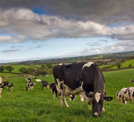 Strathroy pays 38c/L for June milk, back 1c/L