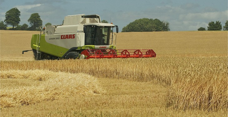 Global barley output down 5%