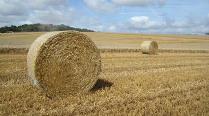 'EU agriculture will struggle to grow'