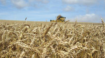 English farmland values at record high of £10,000 (€12,600) per acre