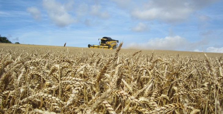 Russian wheat harvest up, prices down