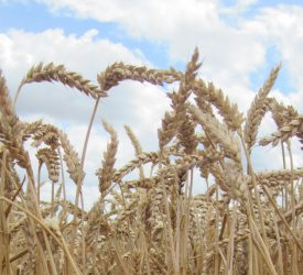 5 predictions for the Irish tillage sector in 2018