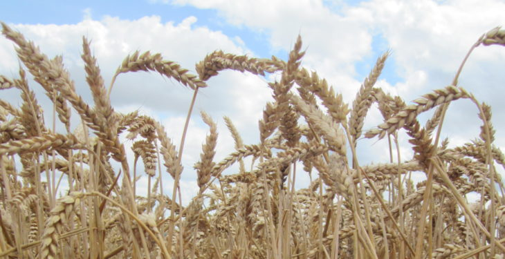 Grain price: Snow fall in Europe…2019 to be hottest on record