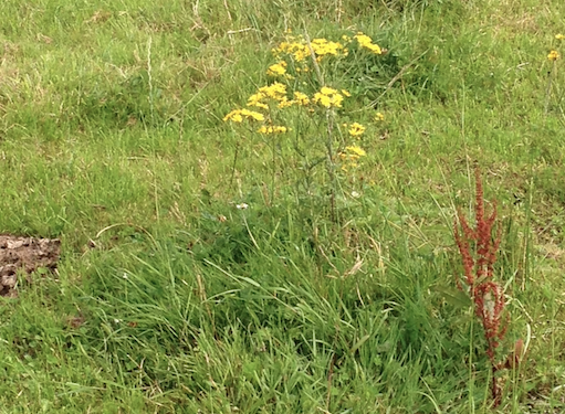 Now is the time to destroy noxious weeds if they're growing on your land