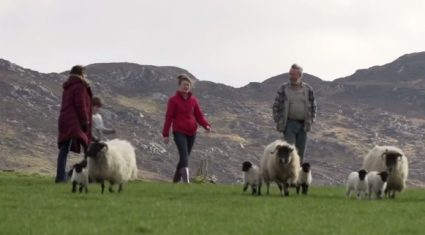 Family farms are one of the absolute core communities of Irish society