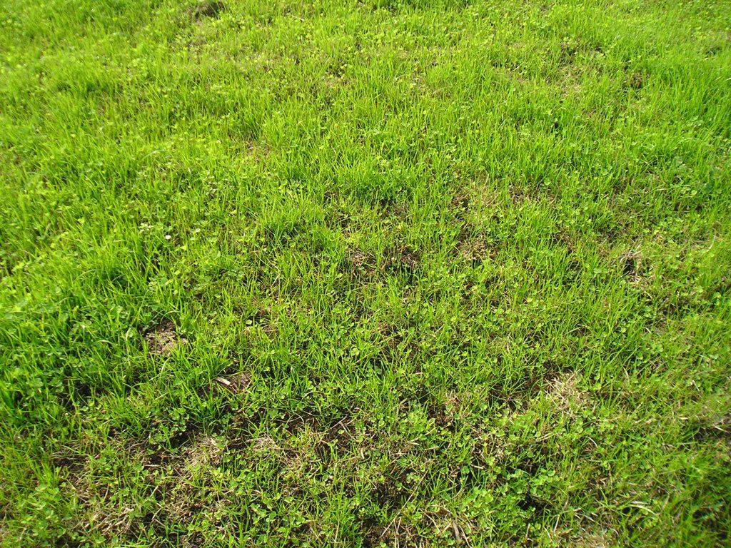 New sward at Greenmount established by min-till