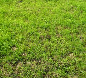 Grass advice: Early management of your reseed