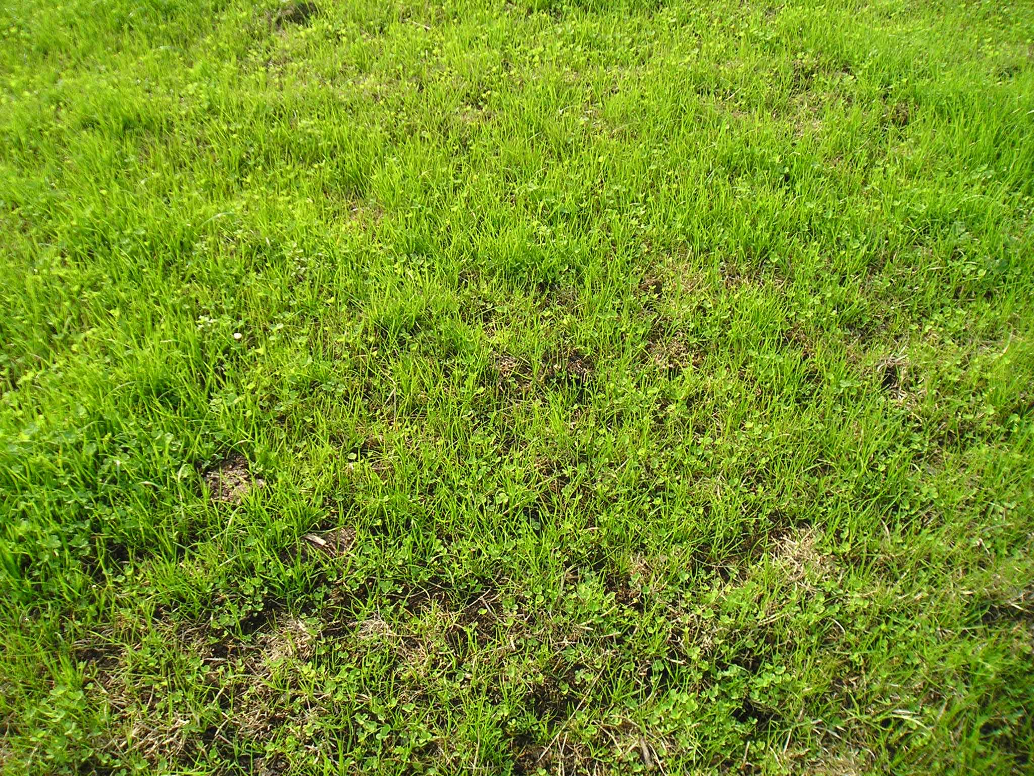 What you need to know if you're considering reseeding this autumn