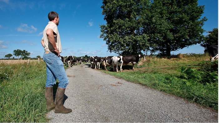 Minimum wage increase for agricultural workers announced in Northern Ireland