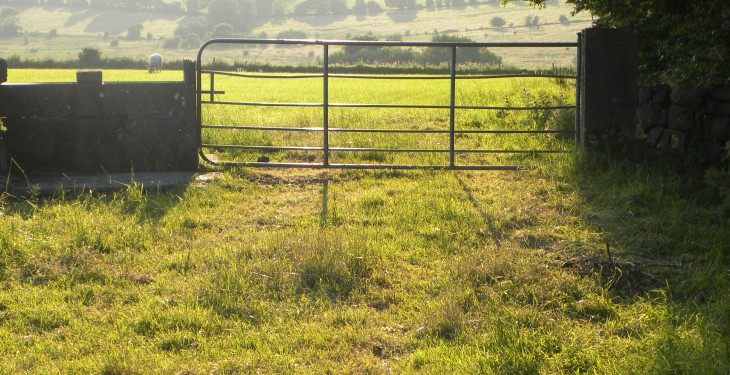 Average marginal grassland price now €6,700/ac
