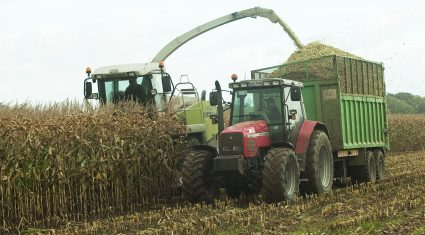 Ireland decides not to seek GM national opt-out