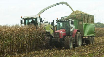 'Maize crops yielding 20t/ac plus'