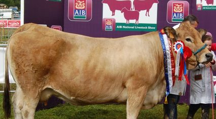 Tullamore Show – Pedigree Cattle results