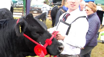 Tullamore Show – Commercial Cattle results