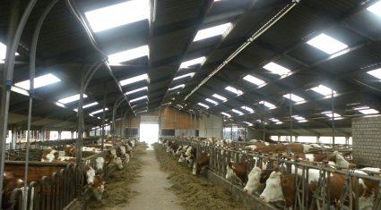 Netherlands dairy herd up 6% in 2 years