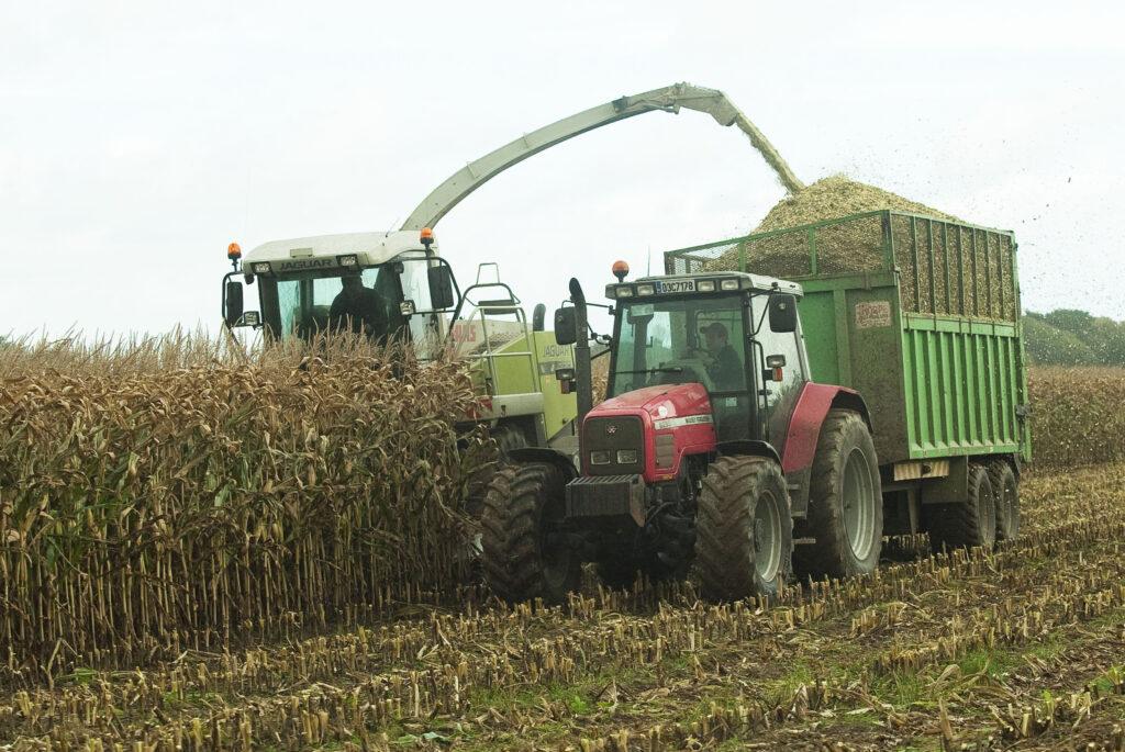 Harvesting_Maize_2_OGP