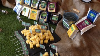 Dairy Board buys Spanish cheese plant