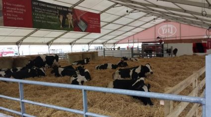 VIDEO: Lely robotic milking draws the crowds at the Ploughing