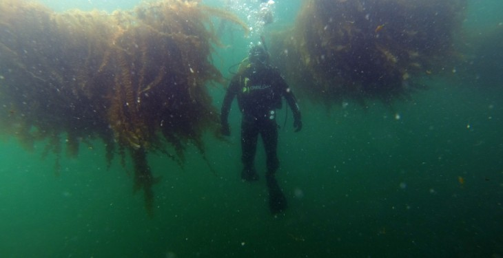 Galway test site for innovative textiles to boost EU seaweed farming