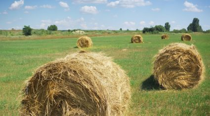 Balance of Single Farm Payment to be paid next week