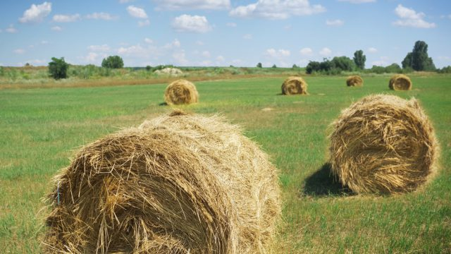 Budget to benefit farmers with expansion on their minds