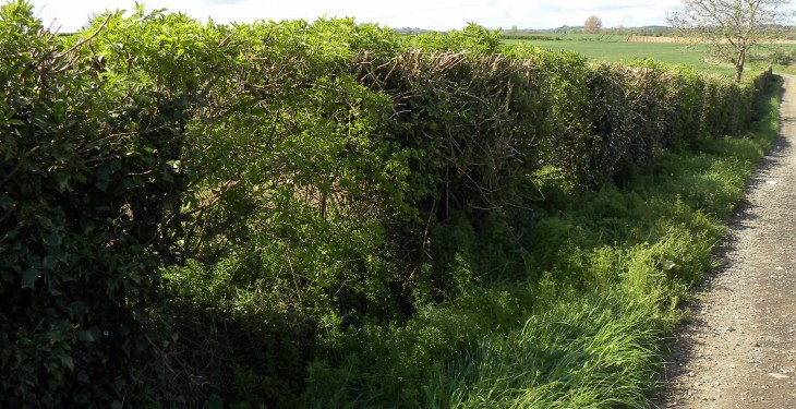Remove hedgerows, stone walls and ditches at your peril