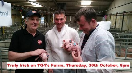 Pig industry features on tonight's Feirm