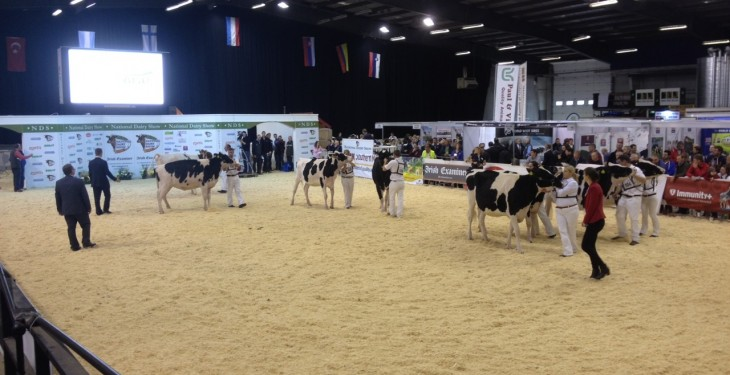 Entries up at this years Millstreet Dairy Show