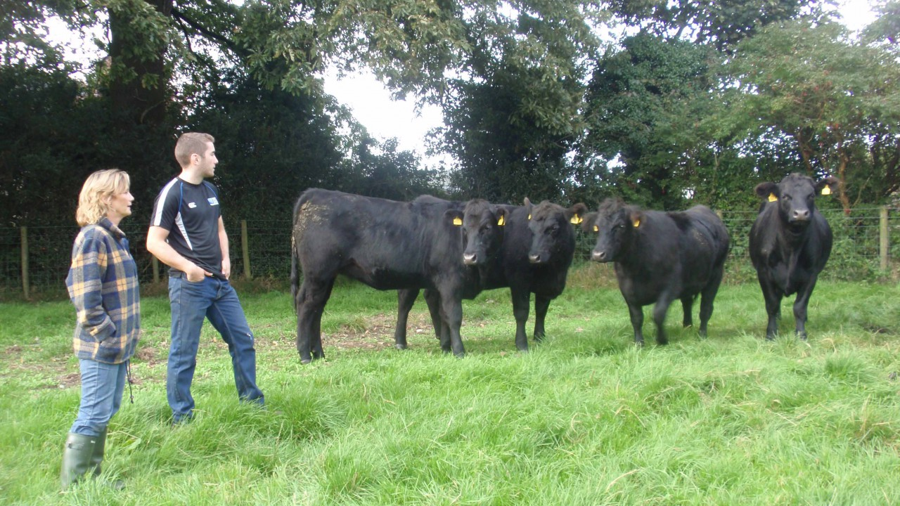 Ease of calving vital for Northern Angus producer