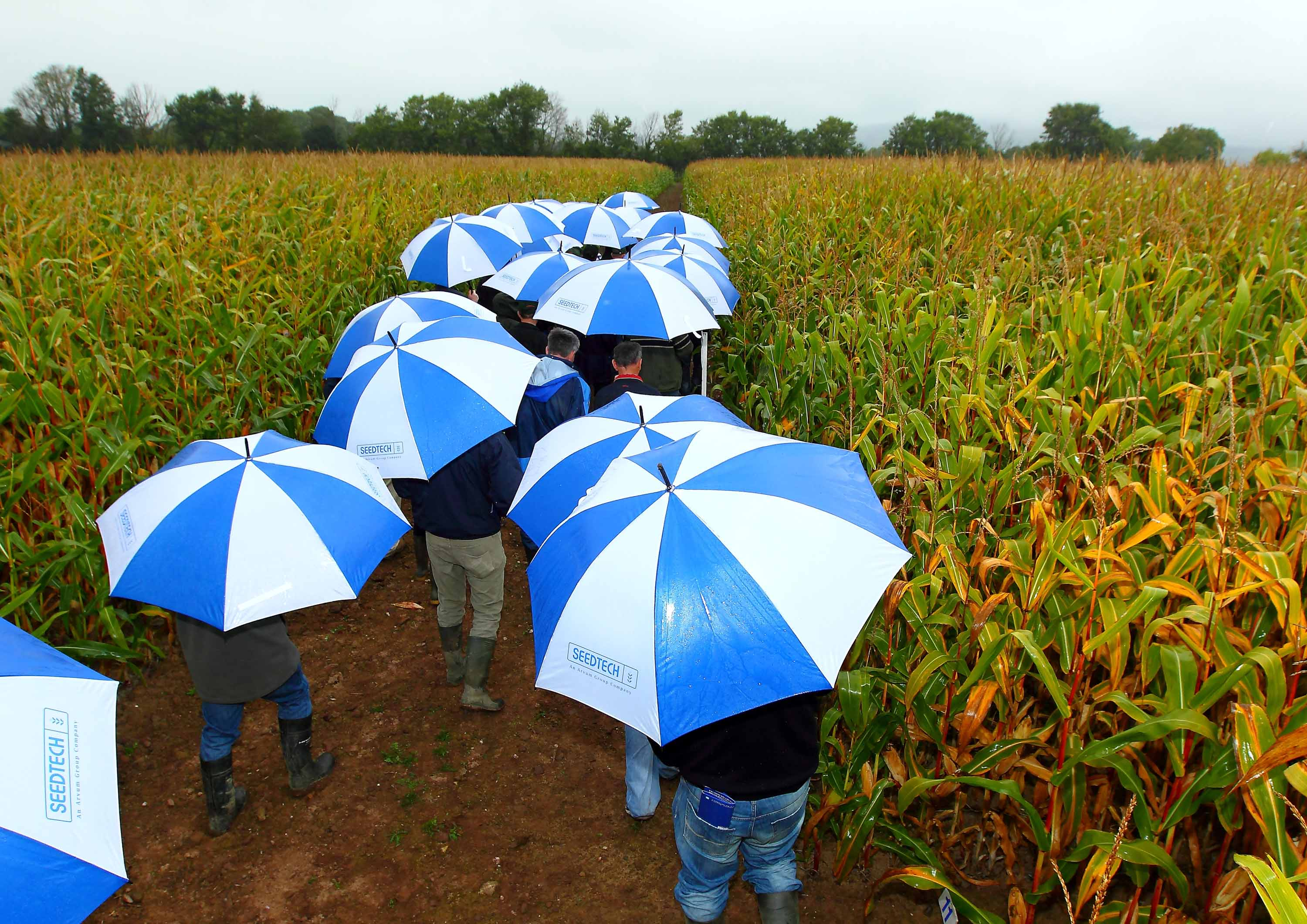 Visitors shelter from the rain under Seedtech umbrellas at their annual maize open day in south Kilkenny.