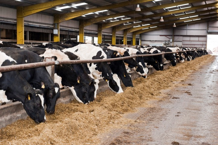Good housing means happy, healthy cows and less mastitis