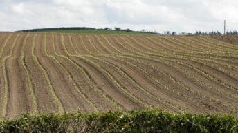 DAERA backs calls for 3-crop rule derogation