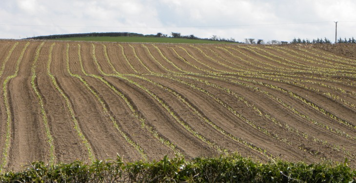 New research says Ireland is underestimating emissions from arable land